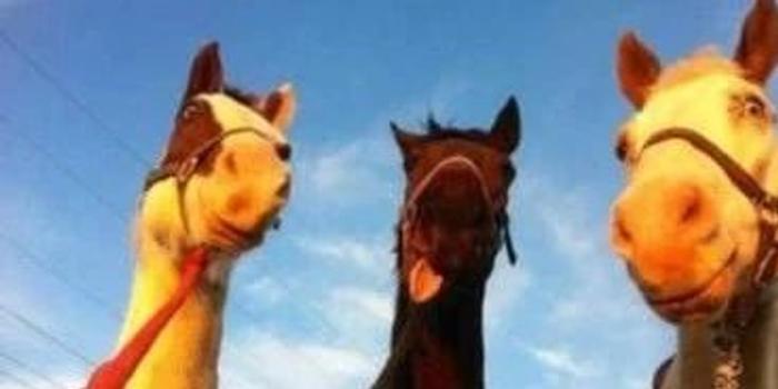 你的马真的只是在盯着你这么简单吗?