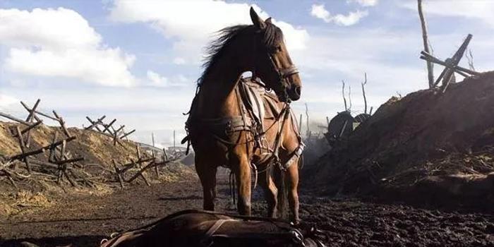 一匹軍馬拯救了一支部隊