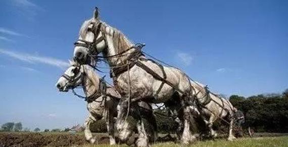 欧洲为什么用马耕地
