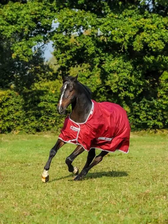 给马穿衣有讲究!如何为爱马挑选一件合身衣服
