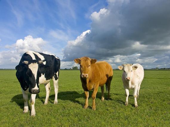 跑步饮食指南:牛奶VS牛肉