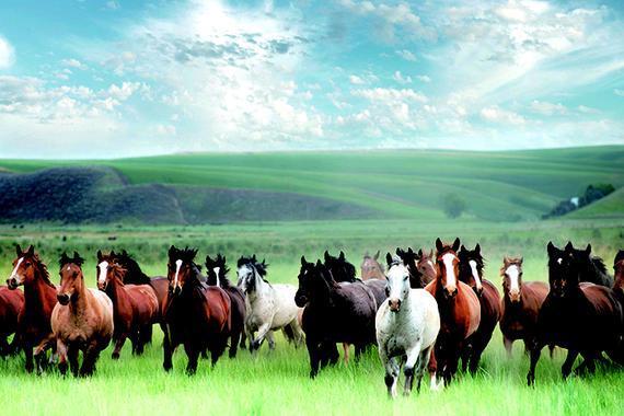 草原赛马气势磅礴