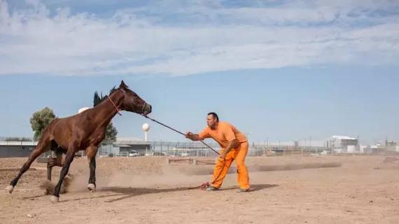 囚犯驯化野马
