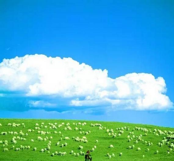 夏季内蒙古风景