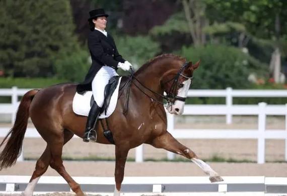 误区:马术并不等于骑马 它有这么多好处你知道吗