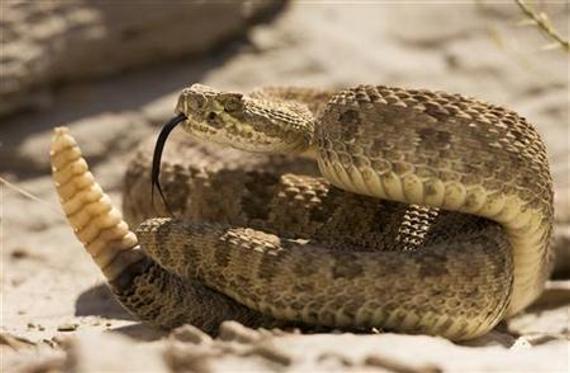 克日,美国女子户外拍婚纱照被蛇咬,边照相边承受抢救。