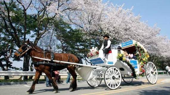 首尔马场的樱花