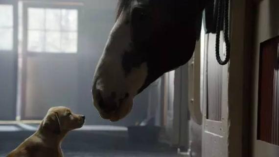 Puppy Love 一个狗狗和马儿之间感人又暖心的故事