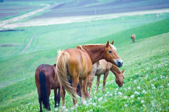 想知道一匹马说什么? 通过面部表情读懂内心秘密