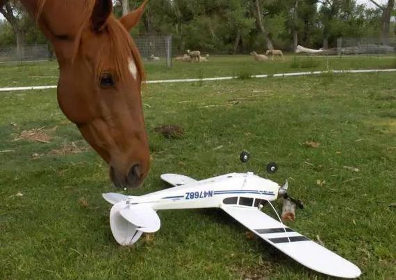 想让马儿漂洋过海来看你 坐上飞机可不止分三步!