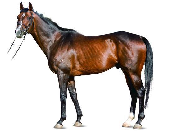 马匹解刨头骨结构图