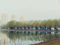 一天双赛 第十九、二十届公园半马成功举办