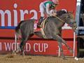 迪拜赛马世界杯9场赛果大盘点!哪匹马最会赚钱?