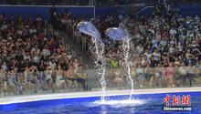 日本帆船赛海豚表演遭批评