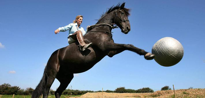 驯马师带爱驹游群岛开启寻根之旅