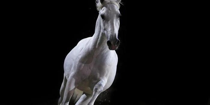名马不只汗血宝马,世界各地名贵马种赏析