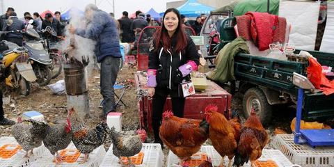 腊月里西安灞桥集市鸡鸣狗叫羊咩咩