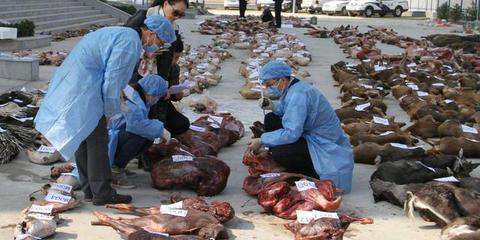甘肃、陕西公安破获一起非法贩卖野生动物案