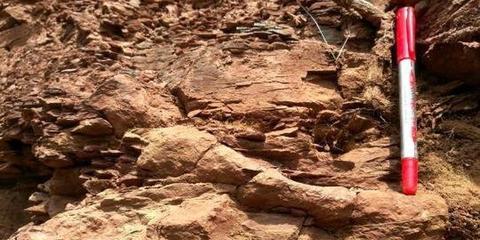 铜川现2.5亿年前远古生物活动遗迹