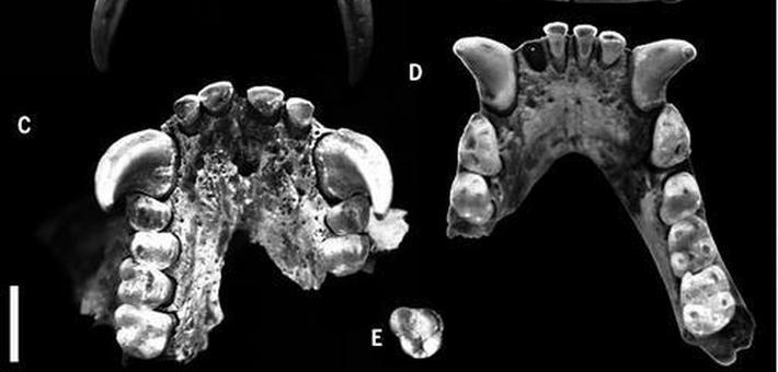 秦始皇祖母墓发现长臂猿遗骸