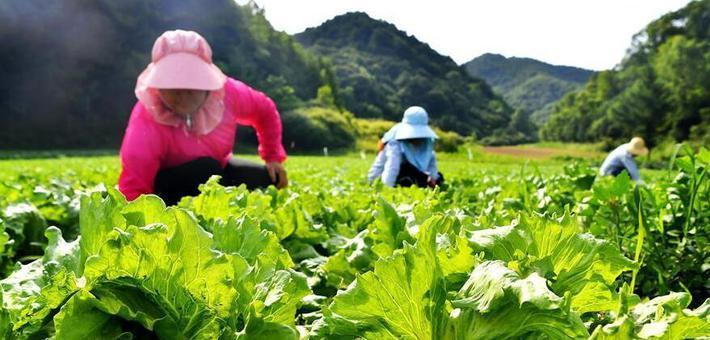 太白县:秦岭高山蔬菜走出大山