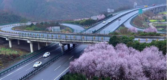 宁强:春到七盘关 微雨润百花