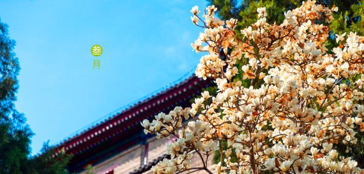 阳春三月,去赴一场春暖花开!