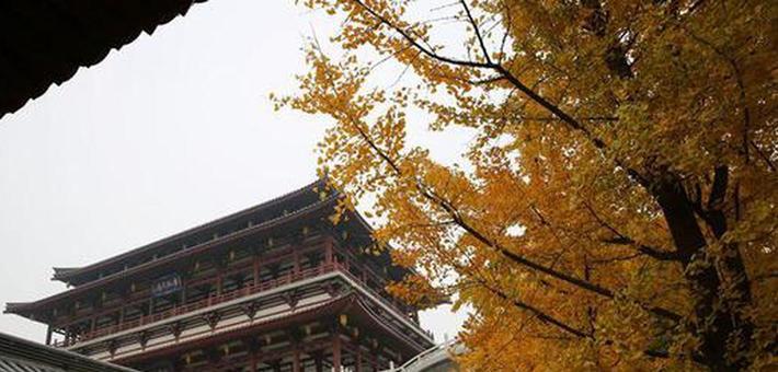 西安天阴冷 芙蓉园里那片秋色最暖心