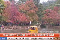 苏城深秋五彩斑斓 天平山迎来最佳观赏期