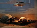 """寒潮来袭 探访北京动物园的""""保暖"""