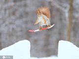 """红松鼠变身""""滑雪高手"""" 雪地中欢"""