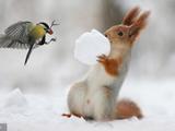 北方大雪纷飞 冰天雪地里的小动物