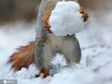 """冻傻了!雪天小动物的呆萌""""沙雕""""趣图"""