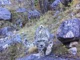 四川格聂神山景区内首次拍摄到国家
