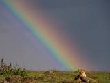 鬼斧神工的自然之美!野生动物与彩虹邂逅瞬间