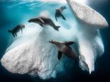 神奇而又美丽的水下世界:冰山下嬉戏