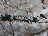 抵御冬日严寒,动物们暖心依偎抱团取