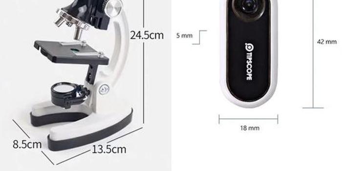 依靠这个手机显微镜 我进入了列文虎克的微观世界