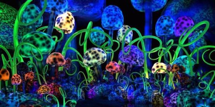 讓人產生幻覺的毒蘑菇,可以治療抑郁癥?