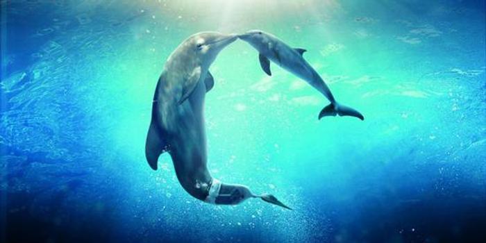 关于海洋馆明星动物的七个最常见认知,都是正确的吗?