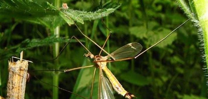 """疟疾感染创造""""人体香味"""" 蚊虫更爱你"""