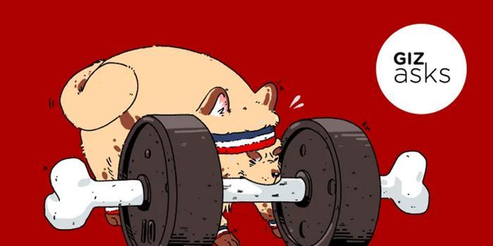 """动物会""""健身""""?锻炼是为了获得复杂的生存技能"""