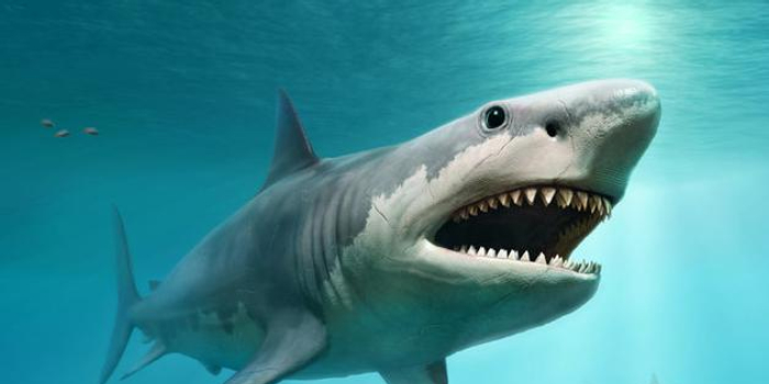 巨齿鲨为什么会灭绝?可能与过高的体温有关