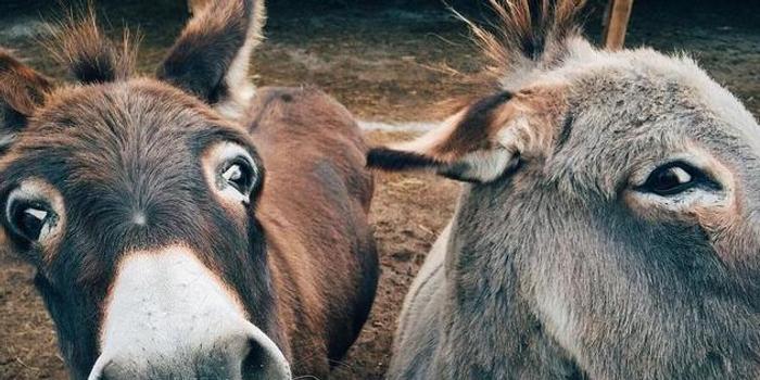 Science:阿膠產業將導致全球毛驢數量減半