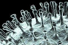 关于新冠肺炎的一切 回形针
