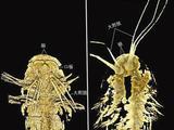 一场虚拟解剖发现5亿年前节肢动物头部秘密