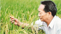 袁隆平:心里装着农民,也被农民装在心里