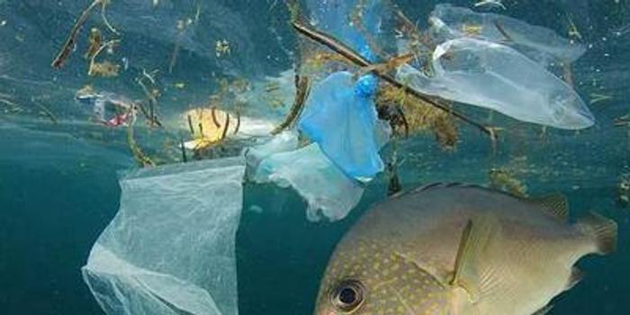 """塑料污染多嚴重?全球人均每周""""吃下""""一張信用卡"""