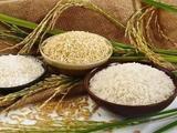 北大学者:全球粮食贸易照旧,不必囤积,莫误春耕