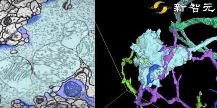 谷歌自动重建了果蝇完整大脑:40万亿像素图像首公开